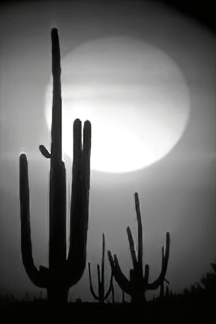 Saguaro Cactus Moon | Novox Music